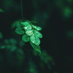 AES#48 Green Economy