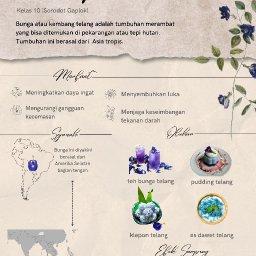 Poster Proyek Berkebun - Kelas 10 - Bunga Telang