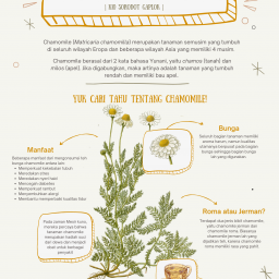 Poster Proyek Berkebun - Kelas 10 - Bunga Chamomile